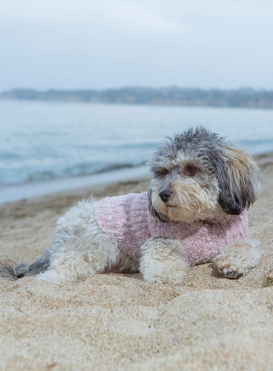 PCC0822 Ribbed Pet Sweater